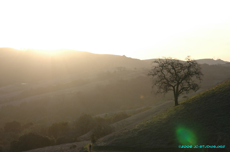 Lonely Tree on a hill, Monte Bello Open Space Preserve, Woodside, CA