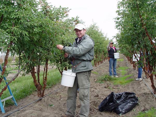 Vasa, seed picking at NWST, September 26th 2007.