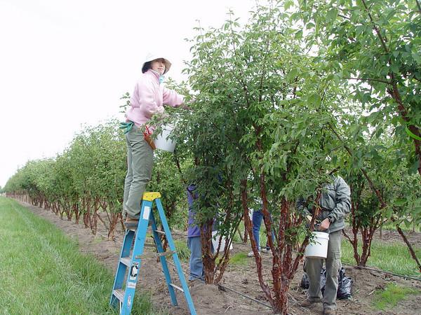Yuko, seed picking at NWST, September 26th 2007.