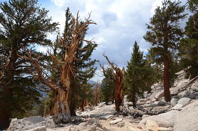I was just fascinated with the foxtail pines in this area and had a hard time not photographing every single tree!