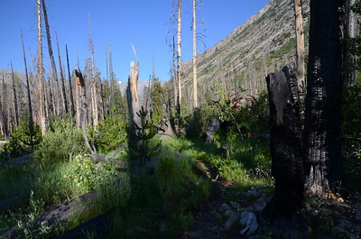 This area was burned in the 2002 Palisade Fire.