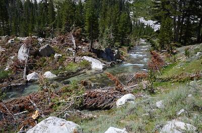 Avalanche debris in LeConte Canyon.