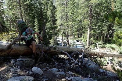 Jill climbing over another log. Photo by Chuck Haak.