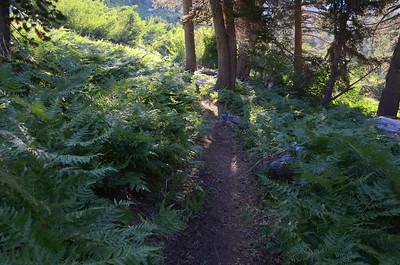Hiking through the ferns.