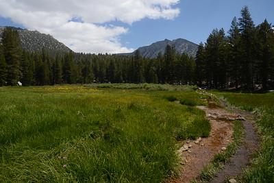 Pretty meadow just before Sallie Keyes Lakes.
