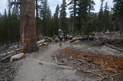 Between Deer Creek and Red's Meadow, we entered an area that was affected by what was called the Devil's Windstorm in the winter of 2011. Winds up to 200mph had blown down tens of thousands of trees in the Red's Meadow Valley area. The devastation was quite jarring.