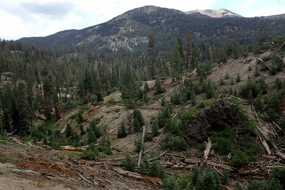 We're out of the fire-affected area now, but still in the blowdown area. Photo by Chuck Haak.