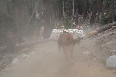 Mule trains kick up a lot of dust.