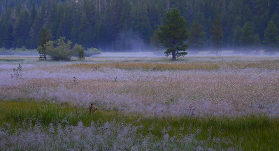 Morning mist in Lyell Canyon.