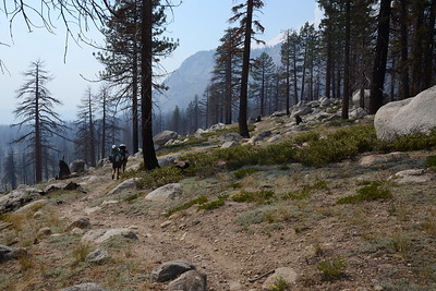 Walking through the burn area from the Meadow Fire (2014).