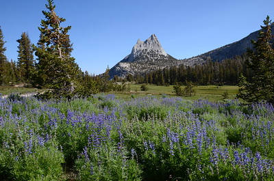 Cathedral Peak and lupine.