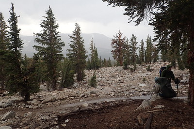 We took shelter under some trees and waited for the thunder and lightning to subside. Bighorn Plateau is a high elevation (11,427 ft) plateau with no tree cover whatsoever and we didn't want to be up there with an electrical storm in the area. Photo by Chuck Haak.