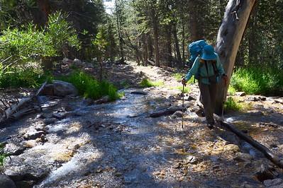 Robin crossing an unknown creek.