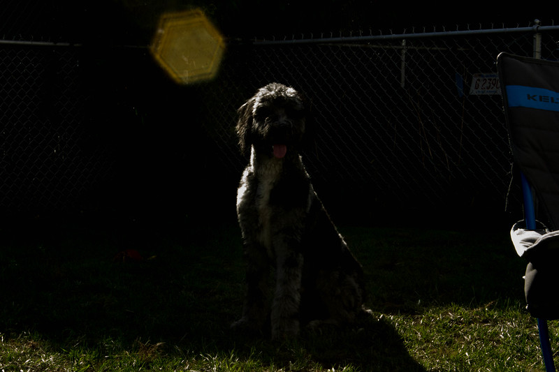 Silhouette Milo