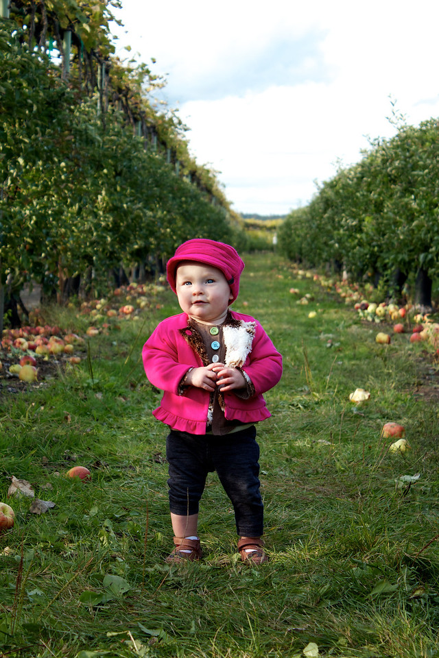 14 Month-old Holland Sokol helps her parents pick apples at Lookout Farm in Natick, MA during Columbus Day weekend.