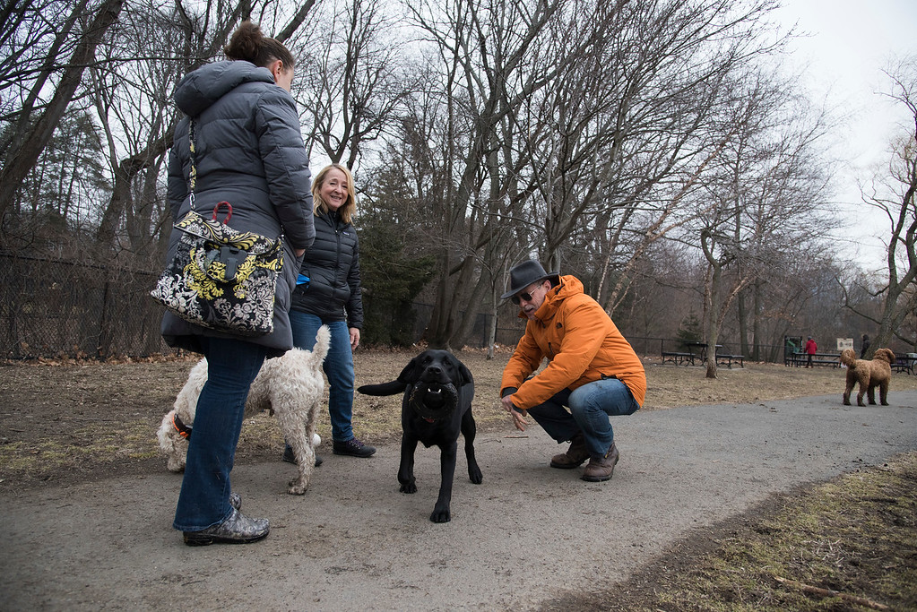 """Kristen Lindgren (left), Ellen Blinder, and Mike Gruben are part of the groups of regulars who walk their dogs in Amory Park in Brookline. """"they're like a clique,"""" joked Lindgren. """"there's always dog park drama."""""""