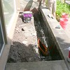 TAR IS APPLIED TO INTERIOR OF PLANTER.