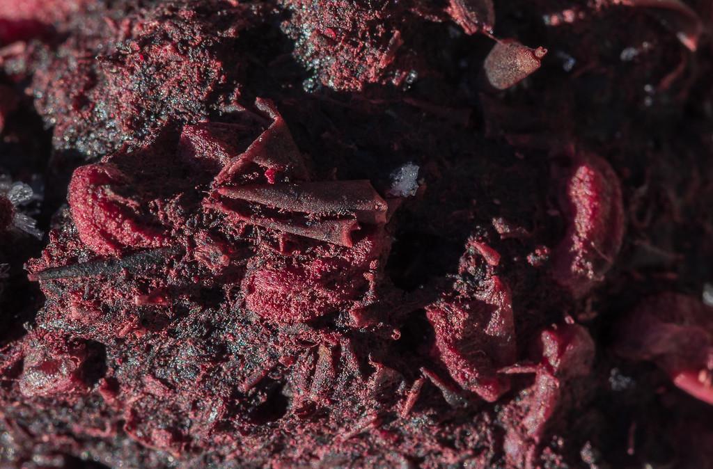 Hawthorn Berry Scat