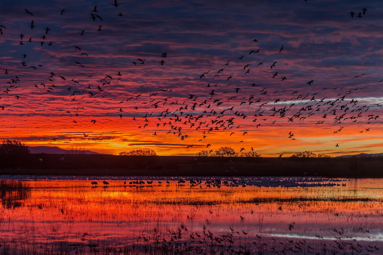 Sunrise Bosque del Apache National Wildlife Refuge