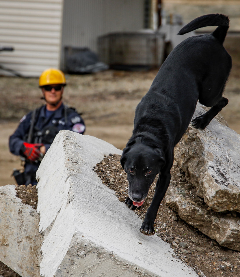 On the Friday morning of January 22, 2016, firefighter, Wade Haller, and his search dog Rex, are at the National Disaster Search Dog Foundation facility, training to find humans trapped in a rubble pile at Santa Paula, California. (©Erica Jacques 2016)