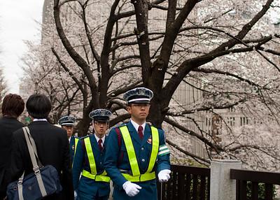 Maintaining order among the sakura fans