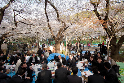 Sararimen enjoying a sakura picnic at Ueno Park