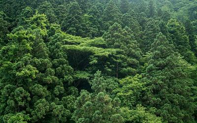 Trees in Niigata Prefecture