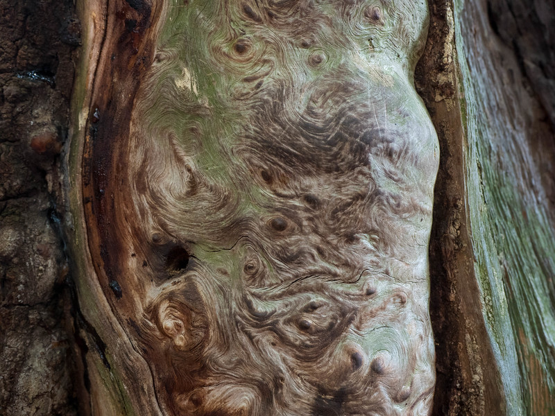 "A tree in Onomichi: ""below"""
