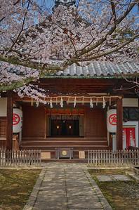Falling sakura at Kotohira-gu
