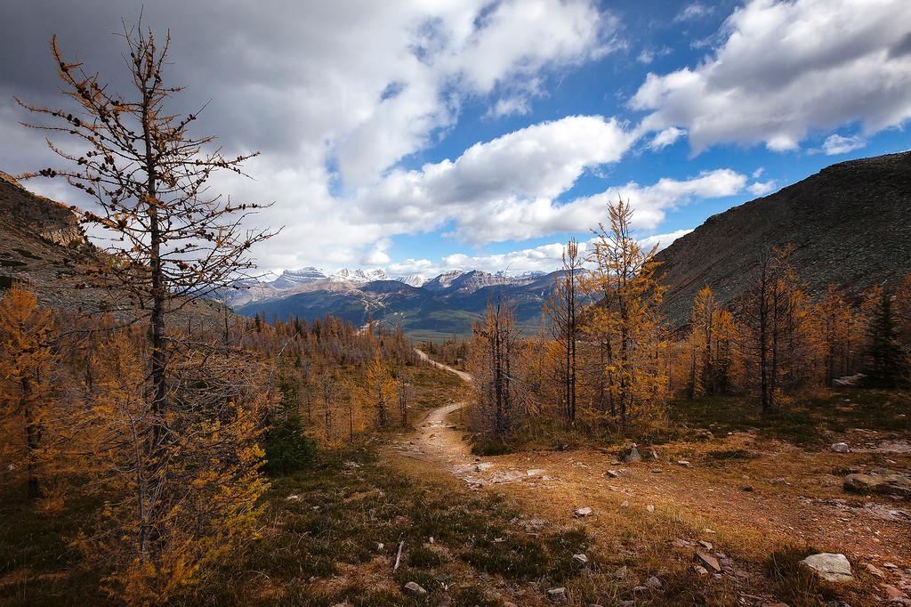 Path Through the Larches