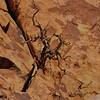 East Siberia Tree 1-4-14.