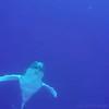 -000-whale
