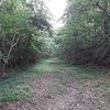 CATHEY PHOTO | <br /> Old Natchez Trace