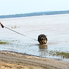 Staff photo by Kevin Harvison |<br /> Blackie, right, gets a drink as his owner Justin Hathor, left, walks his dog on the edge of Lake Eufaula.