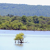 Kevin Harvison | Staff photo<br /> Tops of small trees can be seen out in Lake Eufuala.