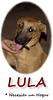 LULA (lost girl, adopt) oval233