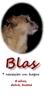 Blas (8 yr boy rescue 1st)_3rd