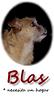 Blas (8 yr boy rescue 1st)_005m233