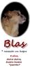 Blas  4 oval