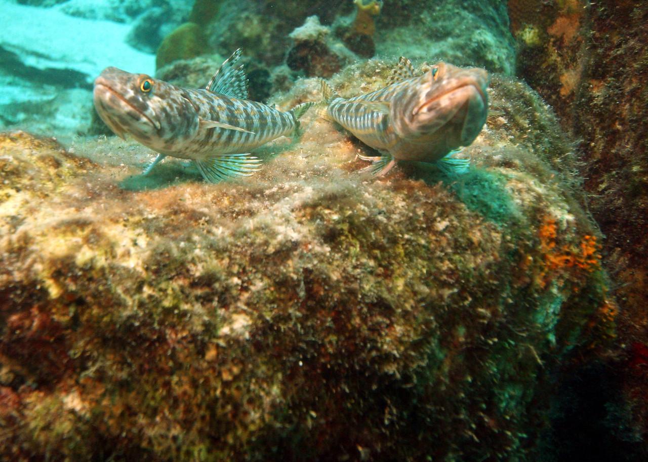 Bonaire - Sept. 2010