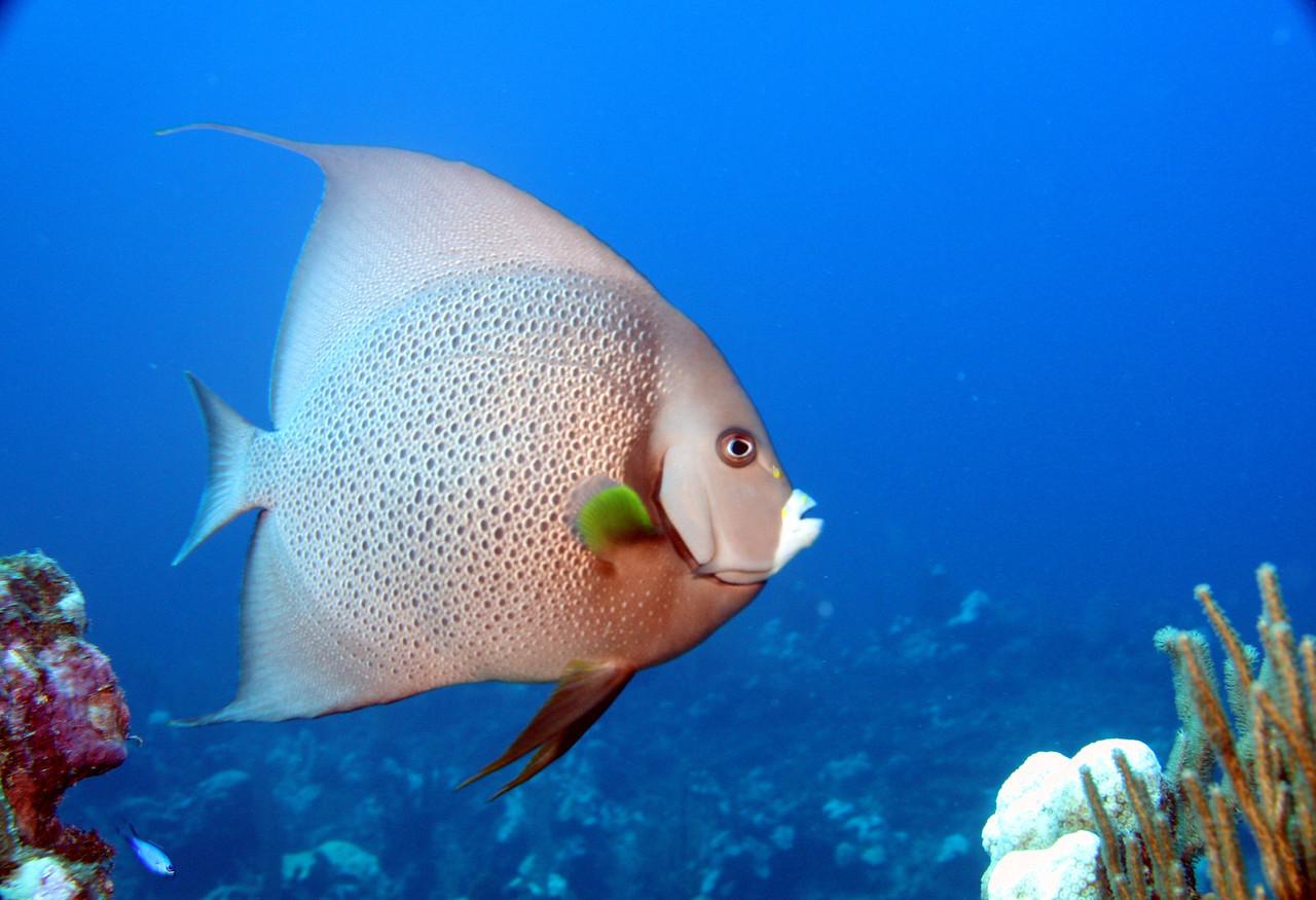 Grand Cayman - Nov. 2009