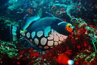 Fiji - Nov. 2013
