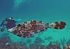 Bonaire - Sept. 2009