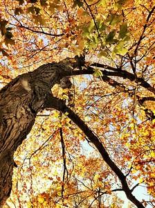 Trees via iPhone