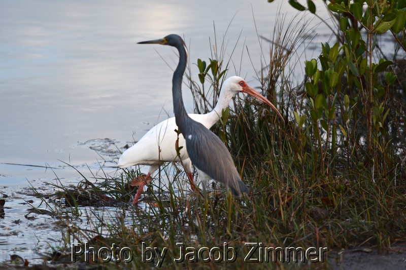 Jacob Zimmer Tampa Photo 017