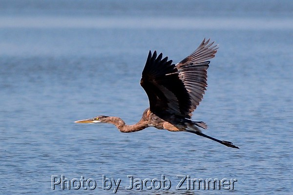 Florida Birds and Wildlife