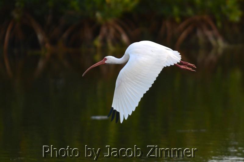 Jacob Zimmer Tampa Photo 014