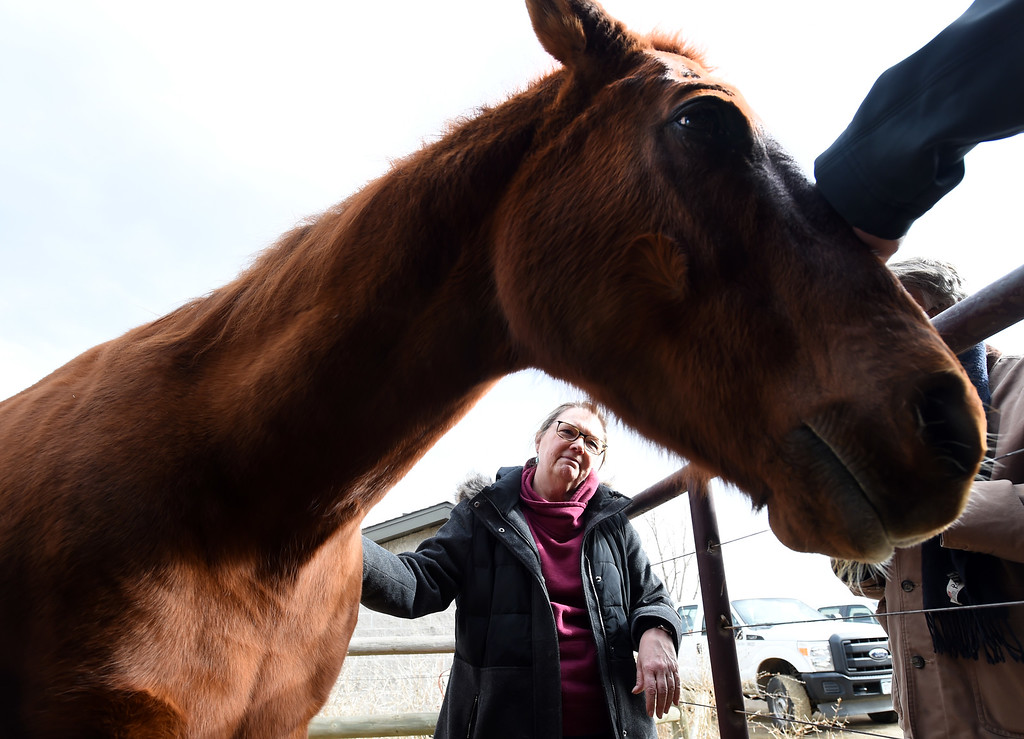 . Julie Johnson, who tends to Boulder\'s one remaining horse - a holdover from the days when open space rangers patrolled the land on horseback,  was visiting with Jack, the horse, as she does on a daily basis.  Cliff Grassmick  Photographer  February 8, 2018