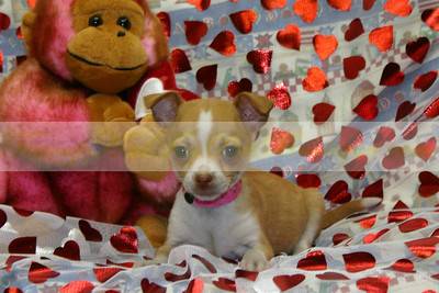 2005 Sold JACK RUSSELL TERRIER MIX