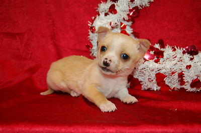 2007 Sold Jack Russell Terrier Mix